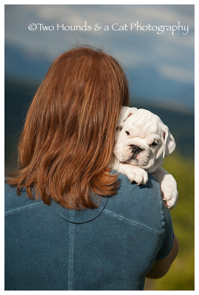 Bulldog puppy hugging