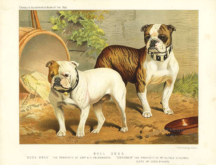 History of a bulldog