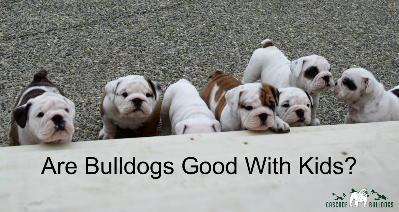 Are bulldogs good with kids?