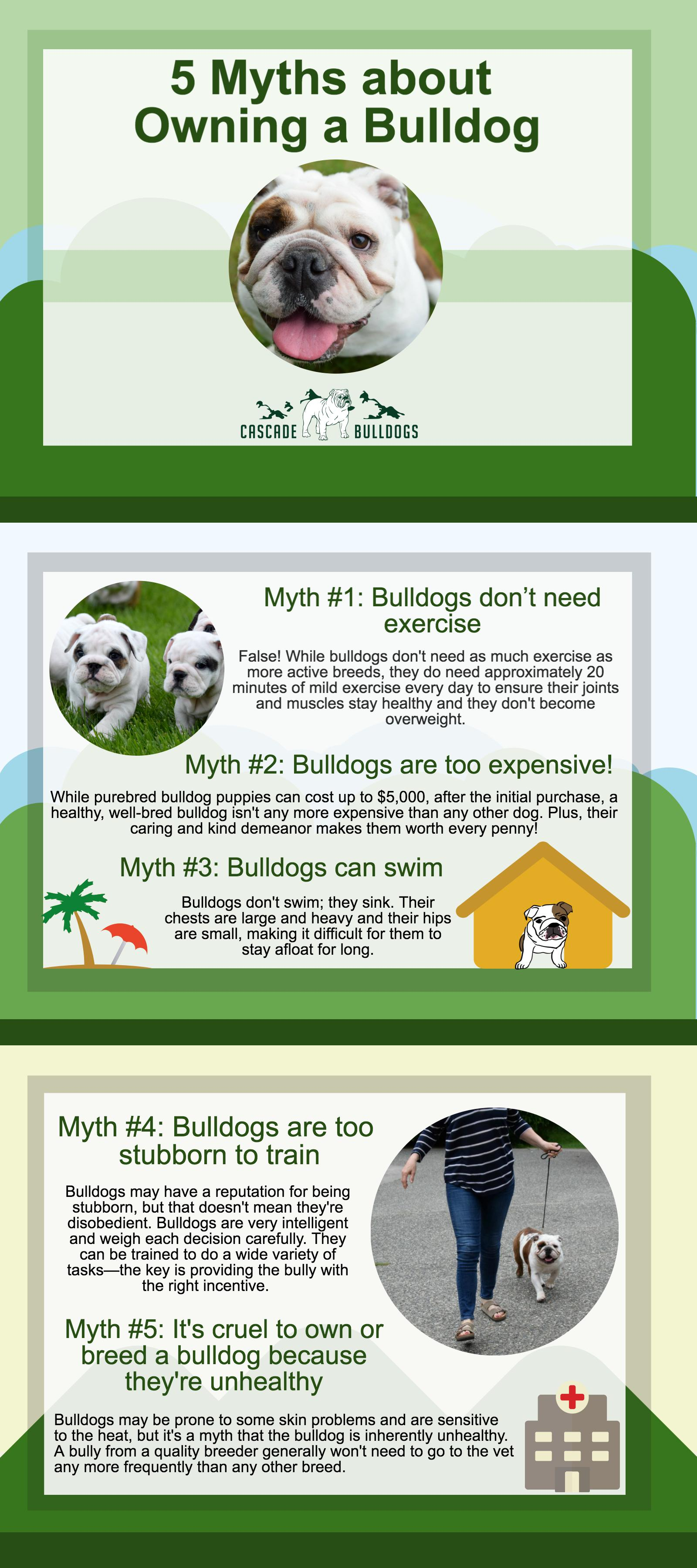 five myths about owning a bulldog