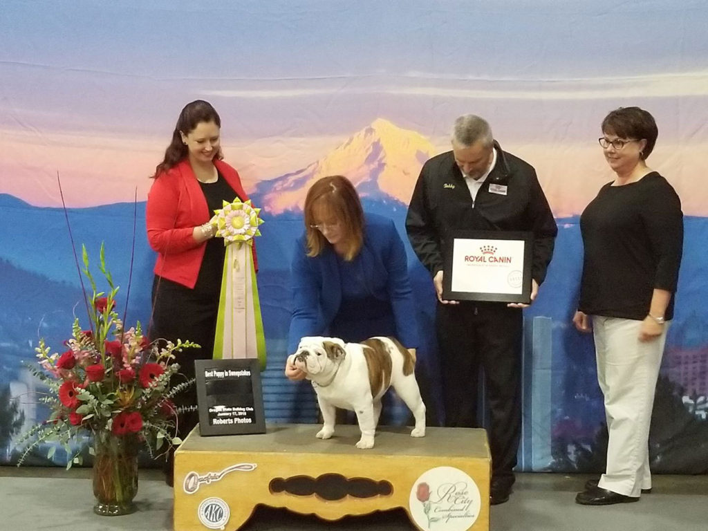 Oregon State Bulldog Club Show